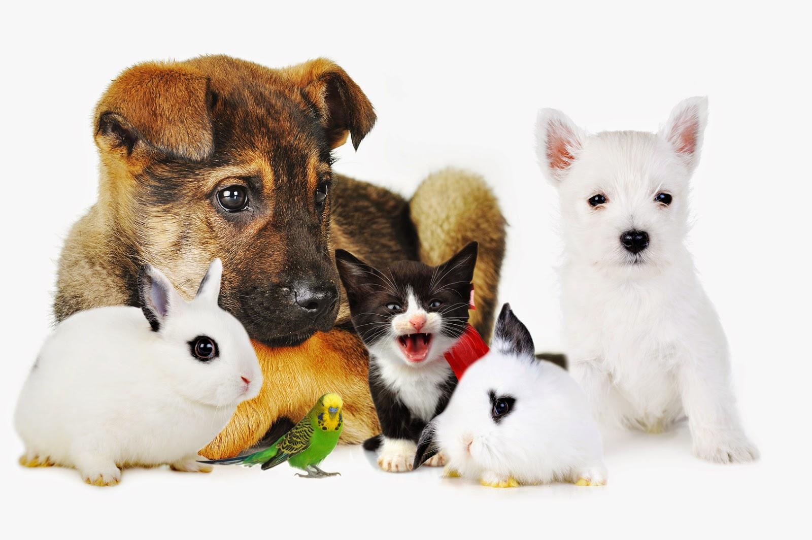 Adevarat si fals despre animalutele de companie