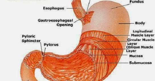Stomach Gastric Cancer Causes Types Symptoms