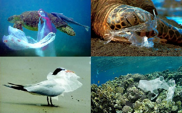 Plastic bags harmful to the environment - Animals Eating Plastic Bags Submited Images