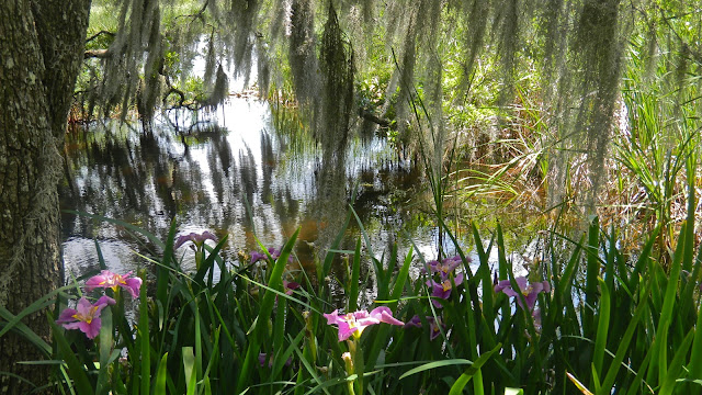 Irises and Spanish moss