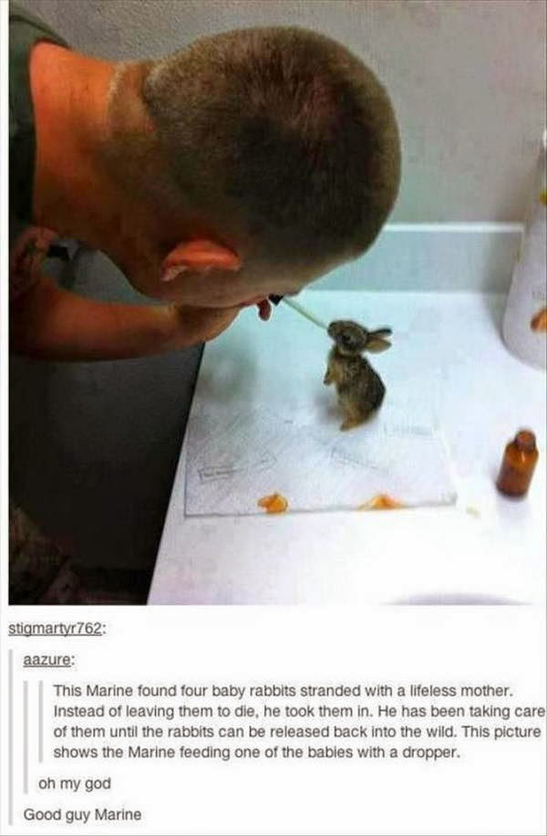People doing amazing things for animals (28 pics), a marine took care abandoned bunny