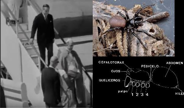 Paralelismo abdomen araña-Pablo VI