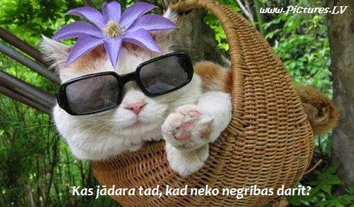 kaķis ar ziedu uz galvas