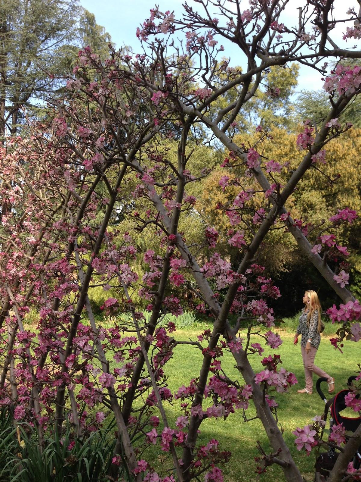 AnnieColors: Descanso Gardens / Spring 2013