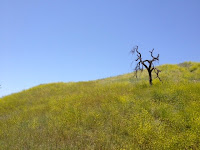 Hiking through the Upper Las Virgenes Open Space Preserve