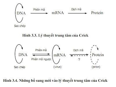 Lý thuyết trung tâm của sinh học phân tử