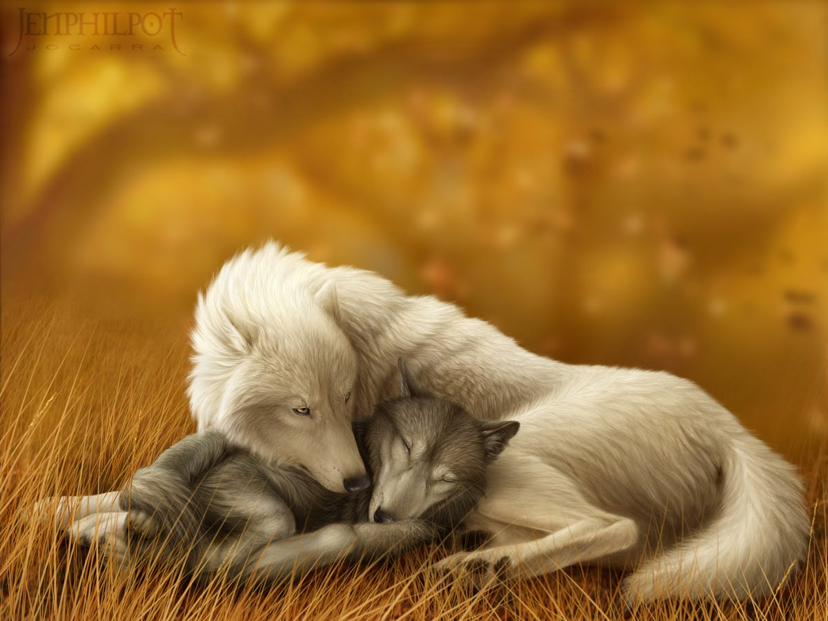 White Wolf And Black Wolf In Love White Wolf : Jen Philp...