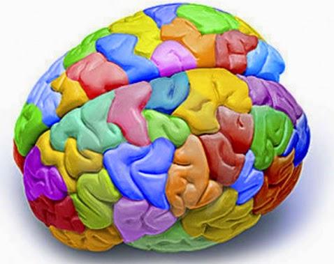 El-factor-que-marcará-la-diferencia-en-ti-cerebro