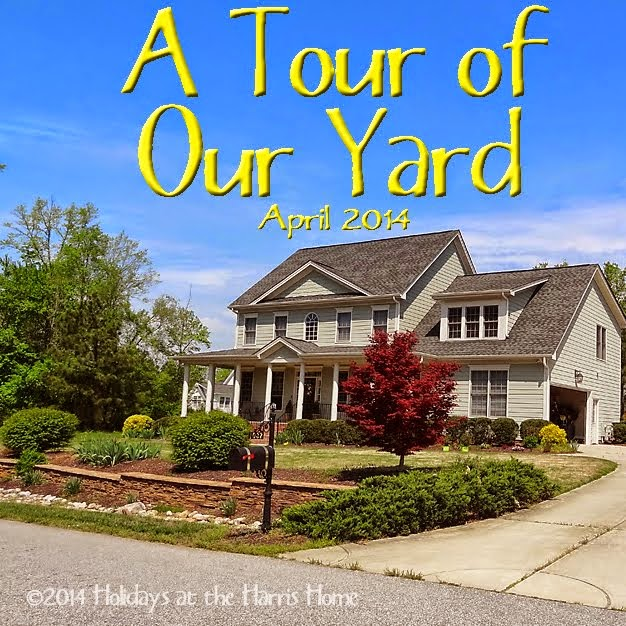 A Tour of Our Yard