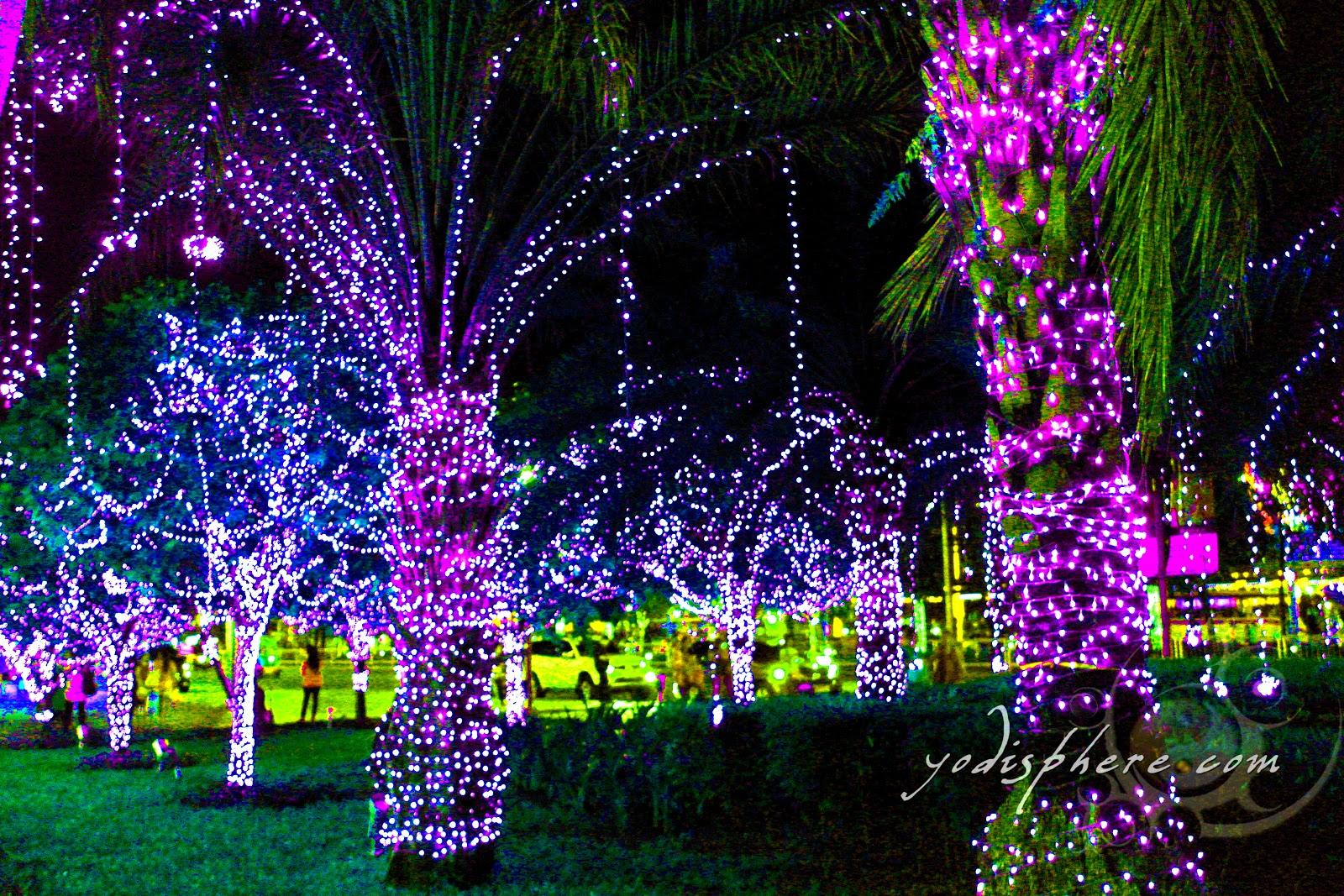how to put lights on a palm tree