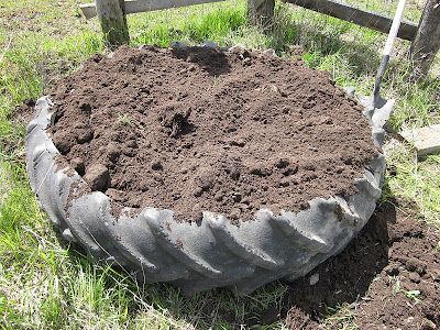 The beginning of a tire garden – 5/15/12