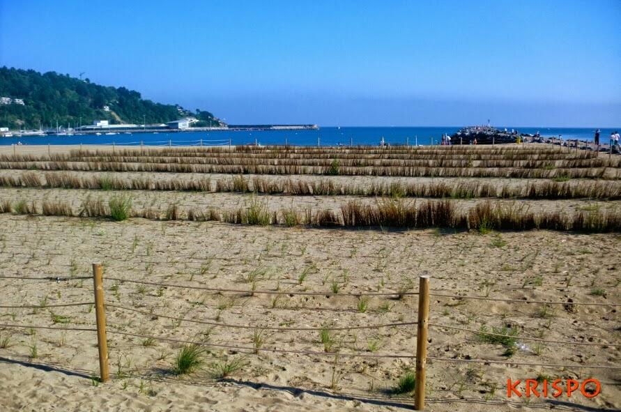 formacion de duna en playa de hondarribia