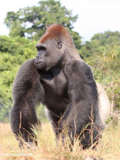 national parks, gabon, where is gabon, africa the national park, gabon national park, what are national parks, a national park, what is a national park, loango national park, loango, national parks service, craters of the moon, a national park gabon, kingkong, national park pictures