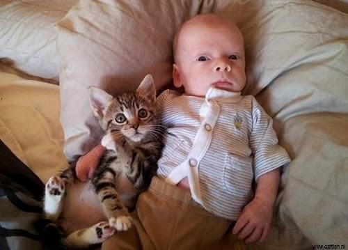 Une Image bébé avec chat