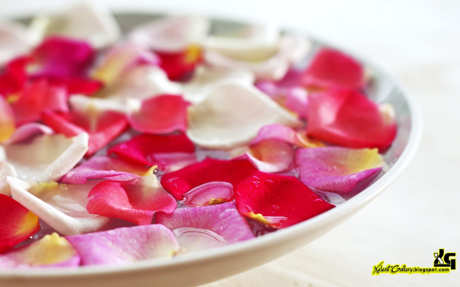 http://1.bp.blogspot.com/-VkUOmm5lpbo/UO3mfUO8PEI/AAAAAAAACSE/NL5FU1wAi6c/s1600/HD+Flower+Wallpapers+%25285%2529.JPG