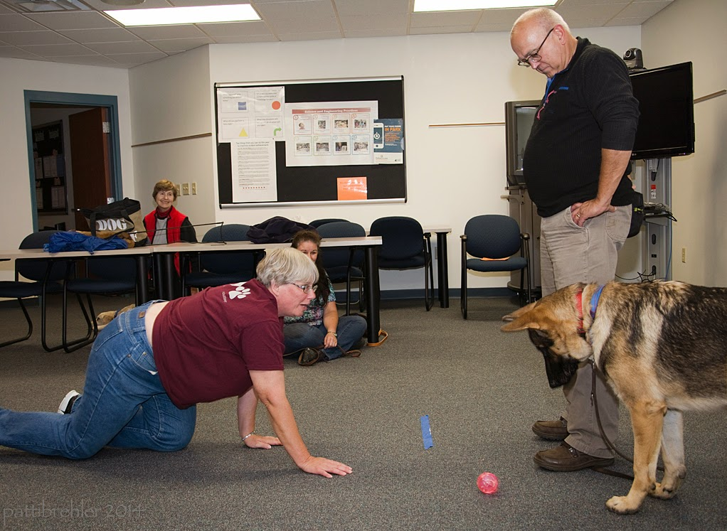 The man is still standing on the shepherd's leash, but now the dog has moved to the man's left side, well behind the tape on the floor. The woman wearing blue jeans and a maroon t-shirt is on her hands and knees very close to the tape and has rolled the pink ball toward the dog. The dog is looking down at the ball, but is leaving it alone!