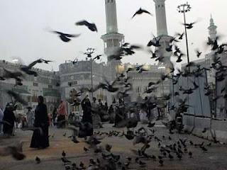 جدل حول مواجهة حمام غار ثور والطير الأبابيل في مكة