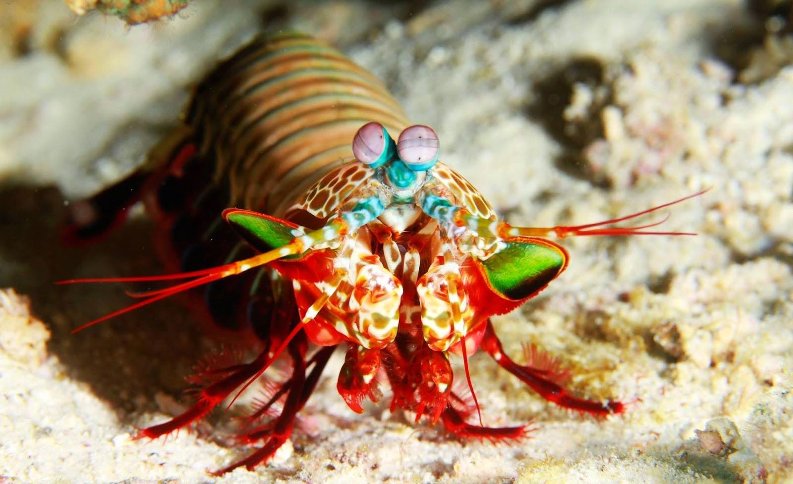 Thailand Divers - Patong beach