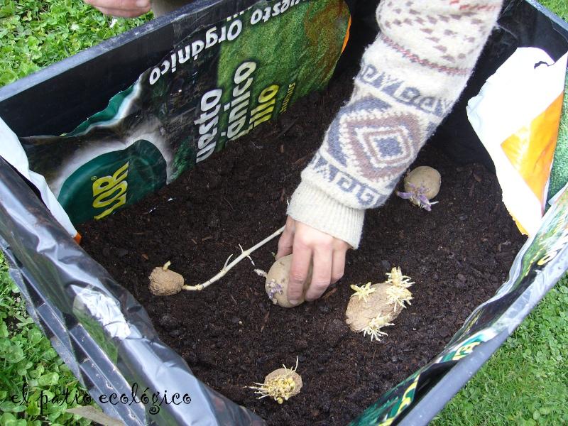 El patio ecol gico c mo cultivar patatas en poco espacio for Como cultivar patatas