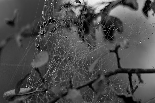 Ein Spinnennetz mit Tautropfen