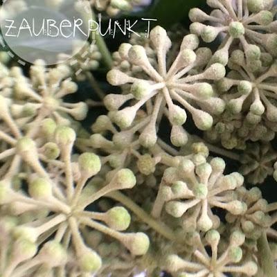 DIY mit Efeublüten - Gesteckter Blütenkranz
