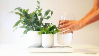 Buy plant tray