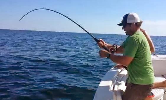 International fishing news video a big tiger shark broke for Shark fishing rod