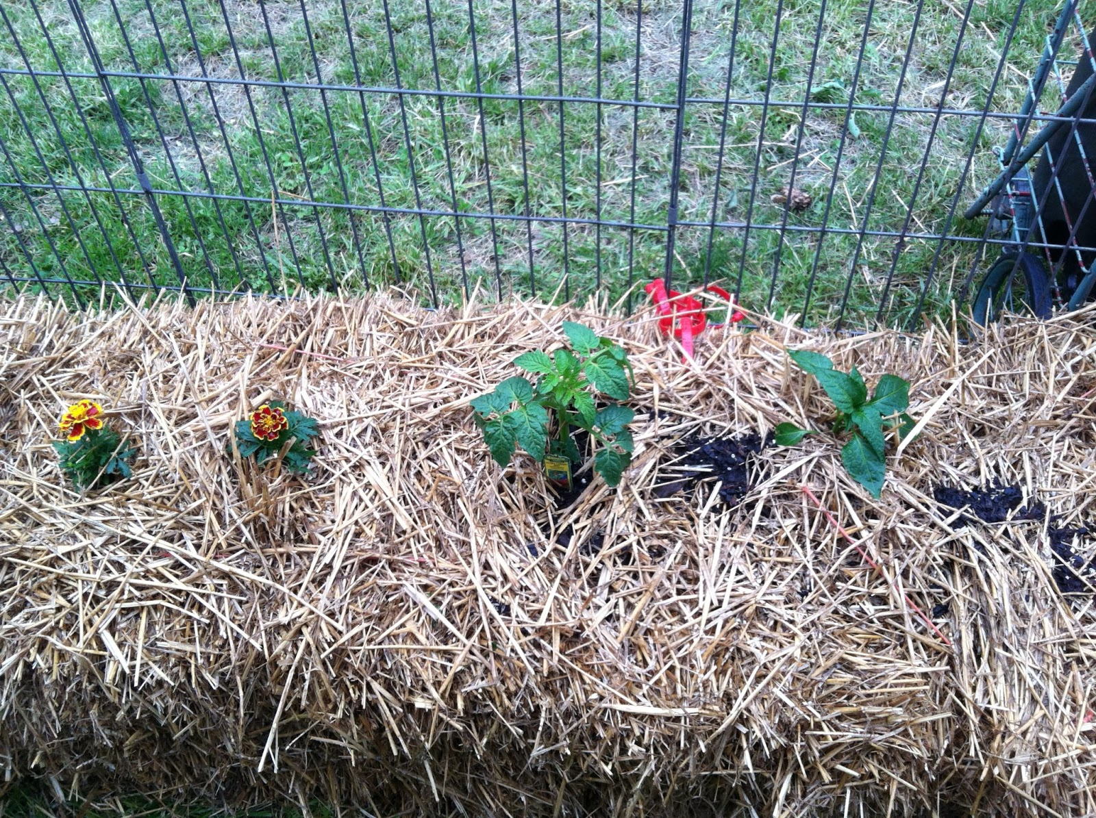 A Straw Bale Garden Was Born Today Granny 39 S Colorful