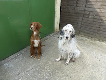 Saffy and Poppy today 26th March
