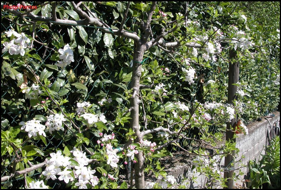 Un giardino di perenni in ticino piante da frutta in for Arbusti per aiuole