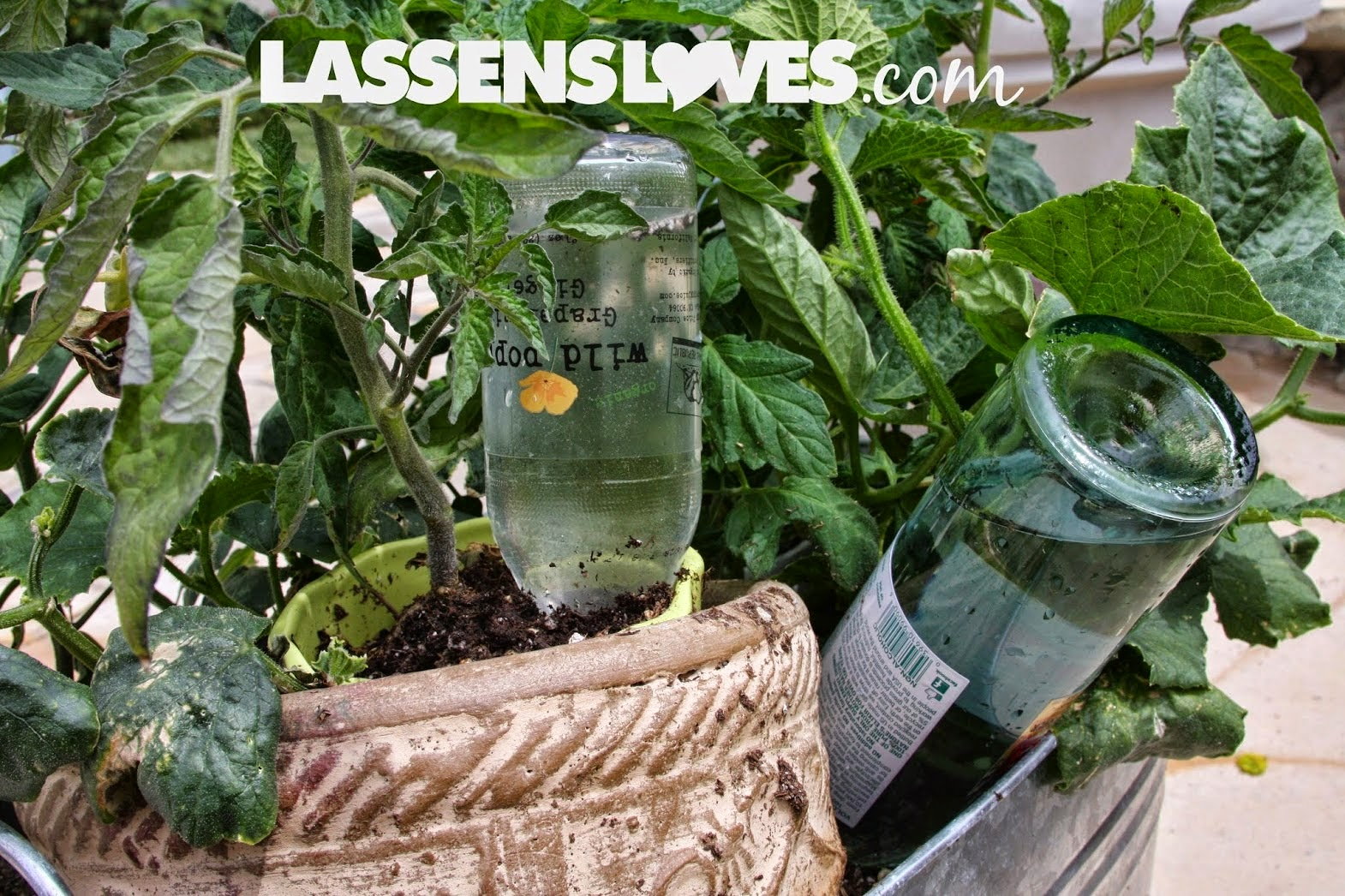 container+gardening, water+conservation, saving+water, save+water