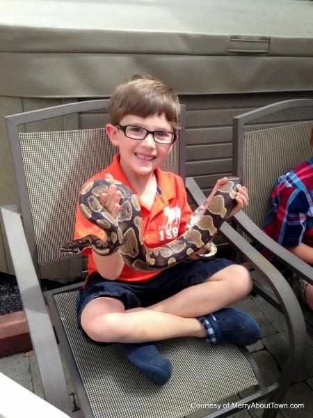 Calgary Reptile Parties via Best Birthdays