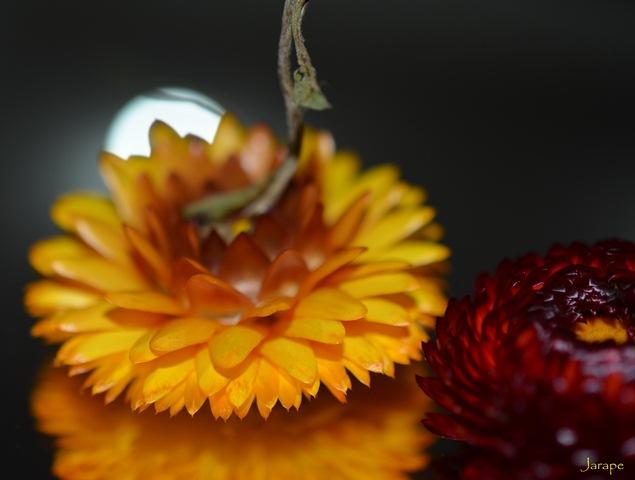 Amarillo, rojo y luna