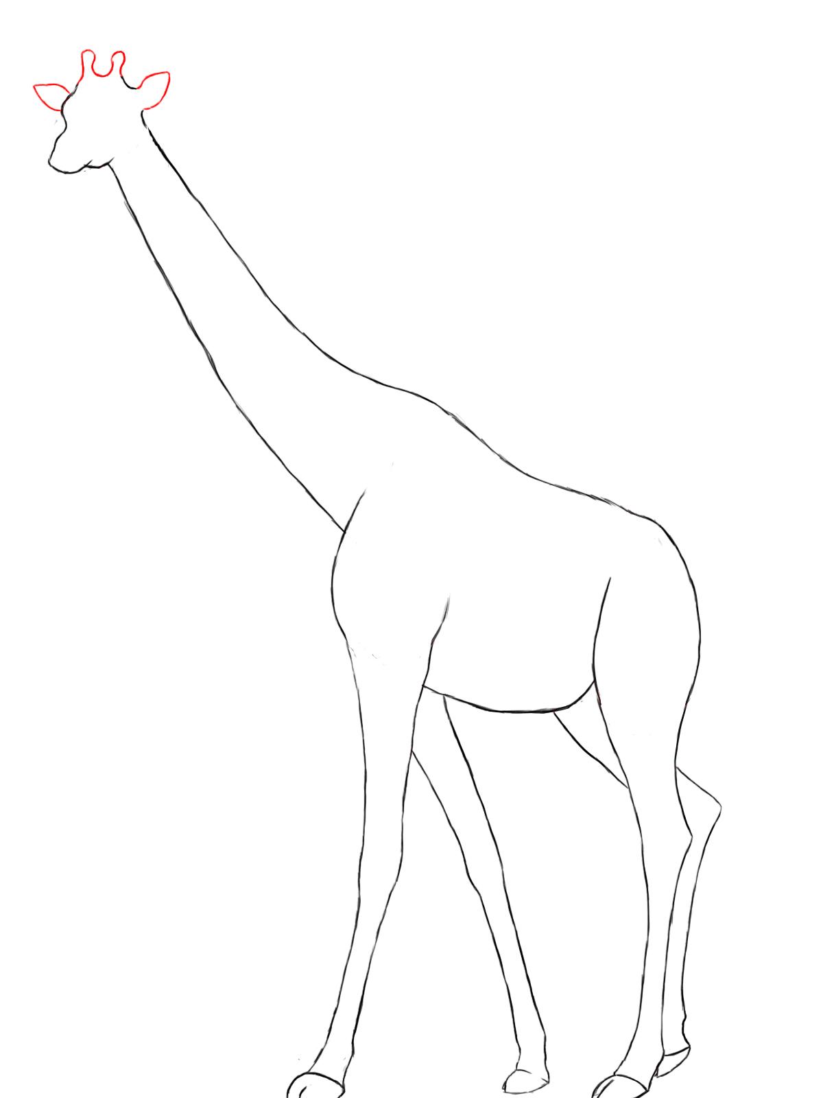Line Drawing Giraffe : How to draw a giraffe central