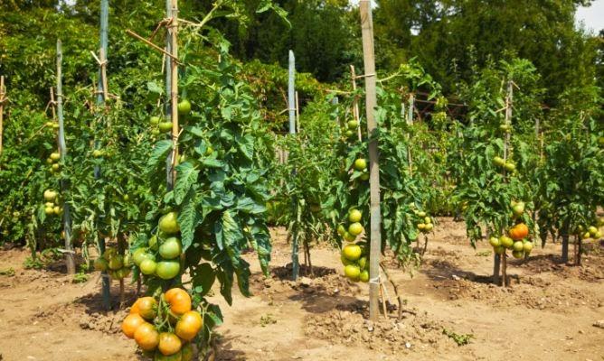 Maestra de primaria huertos y huertas - Plantar arboles frutales ...