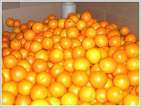 orange_suppliers