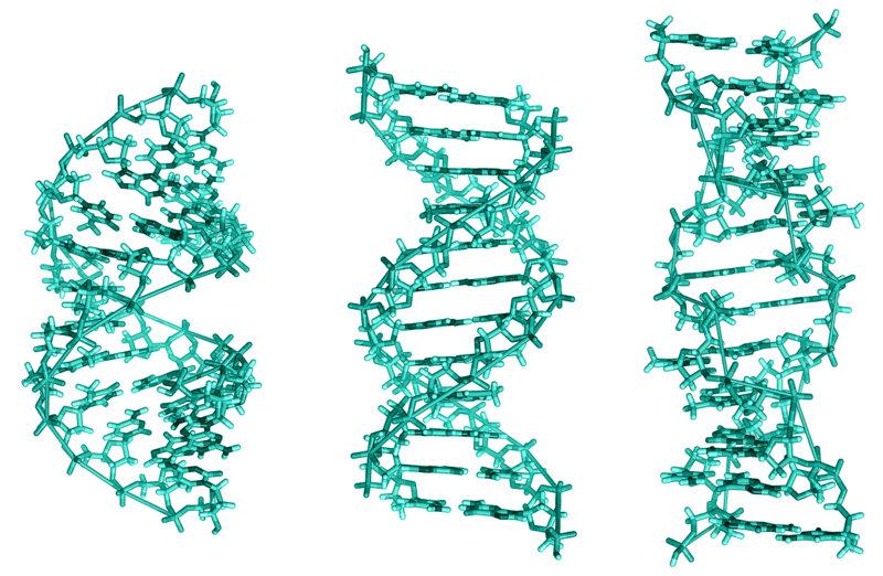DNA lubi, czyli kogo polecamy