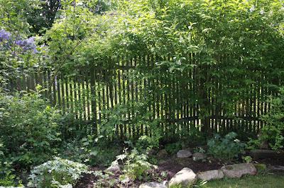 Insynsskydd trädgård pil