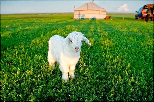 Tác dụng của nhau thai cừu là làm trắng da, đẩy lùi lão hóa và cải thiện độ mịn màng cho da.
