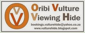 Oribi Vulture Viewing Hide Click for details.