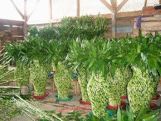 bambu sri rejeki