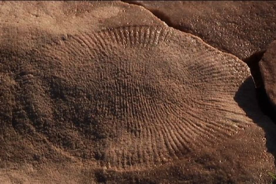 Fossils: South Australia's outback holds Earth's oldest animal fossils
