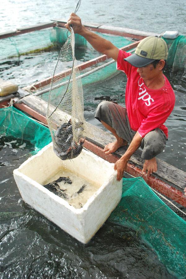 Gia Lai: Nuôi cá lồng ở Ia Hdreh