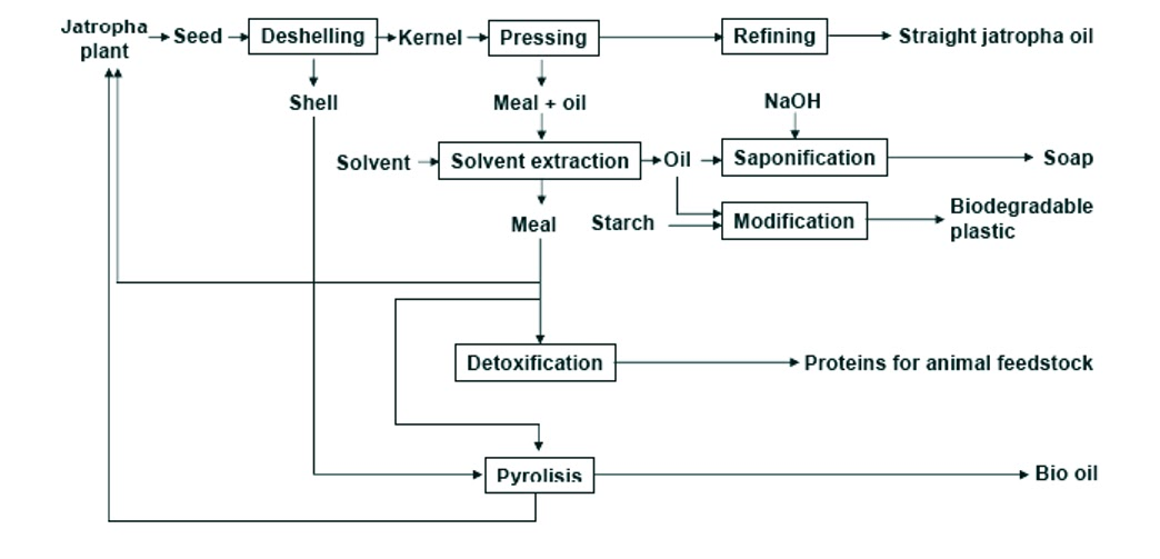 Flow Chart of Soap Seed Processing Flow Chart
