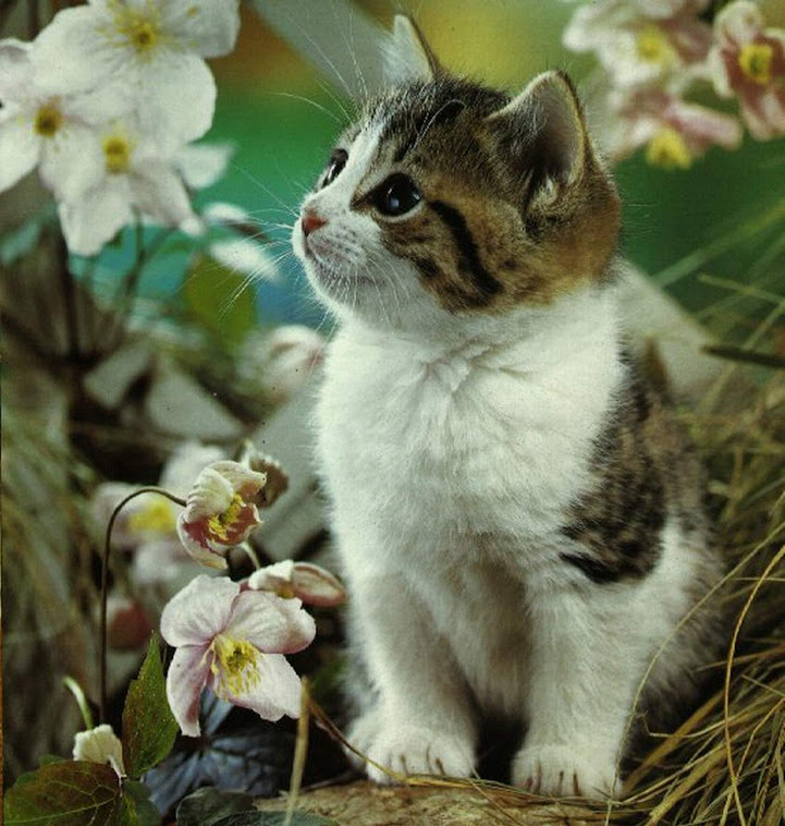 KucingQ Sayang