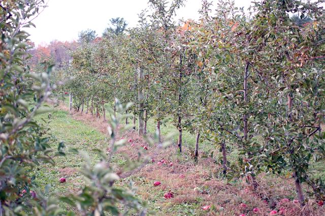 nashoba valley winery, fall style, new england fall style
