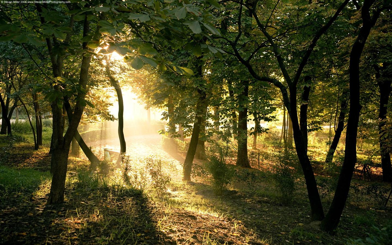 http://1.bp.blogspot.com/-Voyj1Wr228c/TfyLoYWOYrI/AAAAAAAAA7o/mQpuABOOMuY/s1600/Nature+%25286%2529.jpg