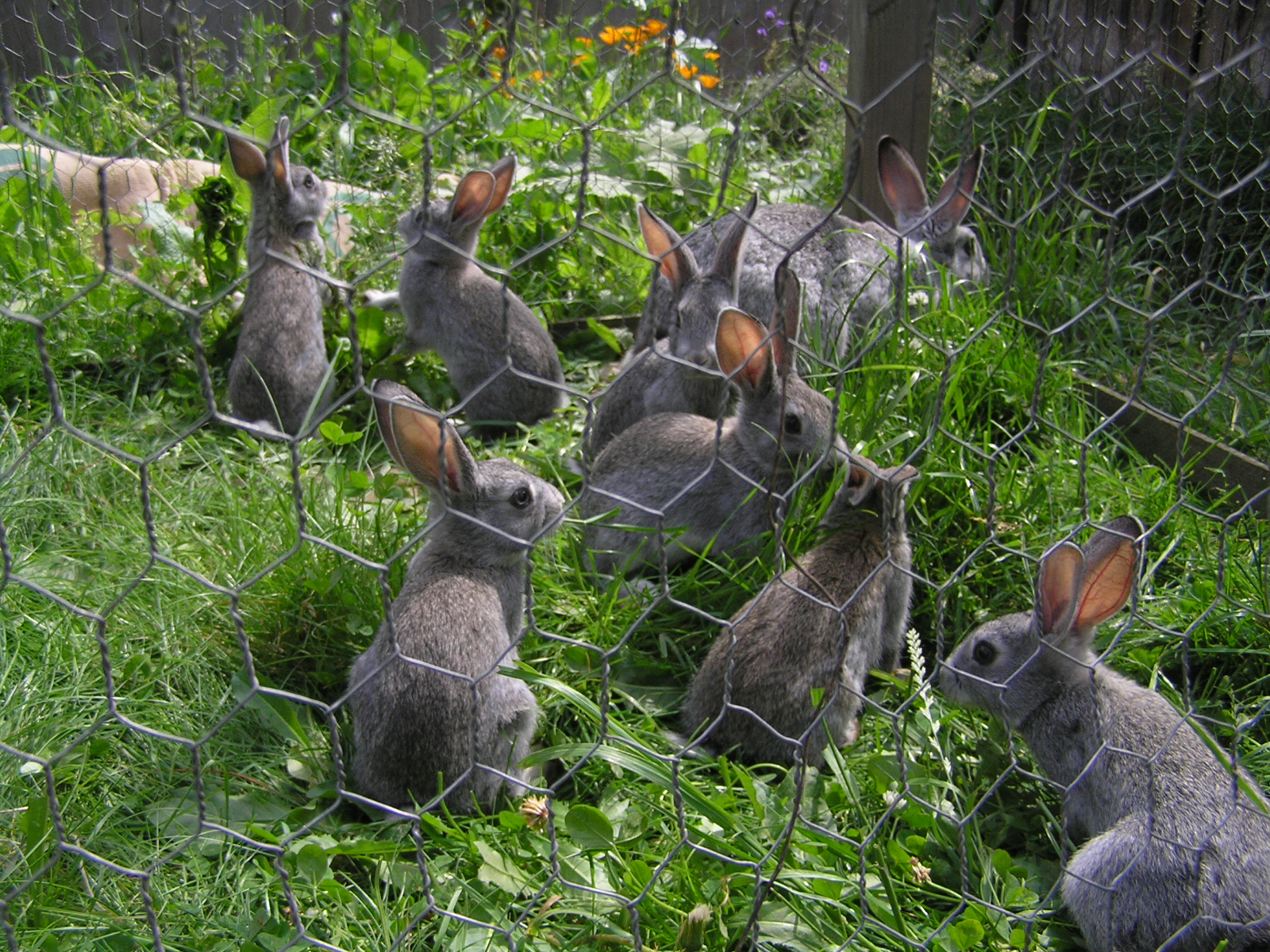 Hens and the garden a tragedy a life unprocessed - How to keep rabbits out of a garden ...