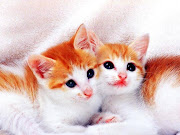 Very Cute Cat Wallpaper Hd. If you are looking for cat wallpaper you want