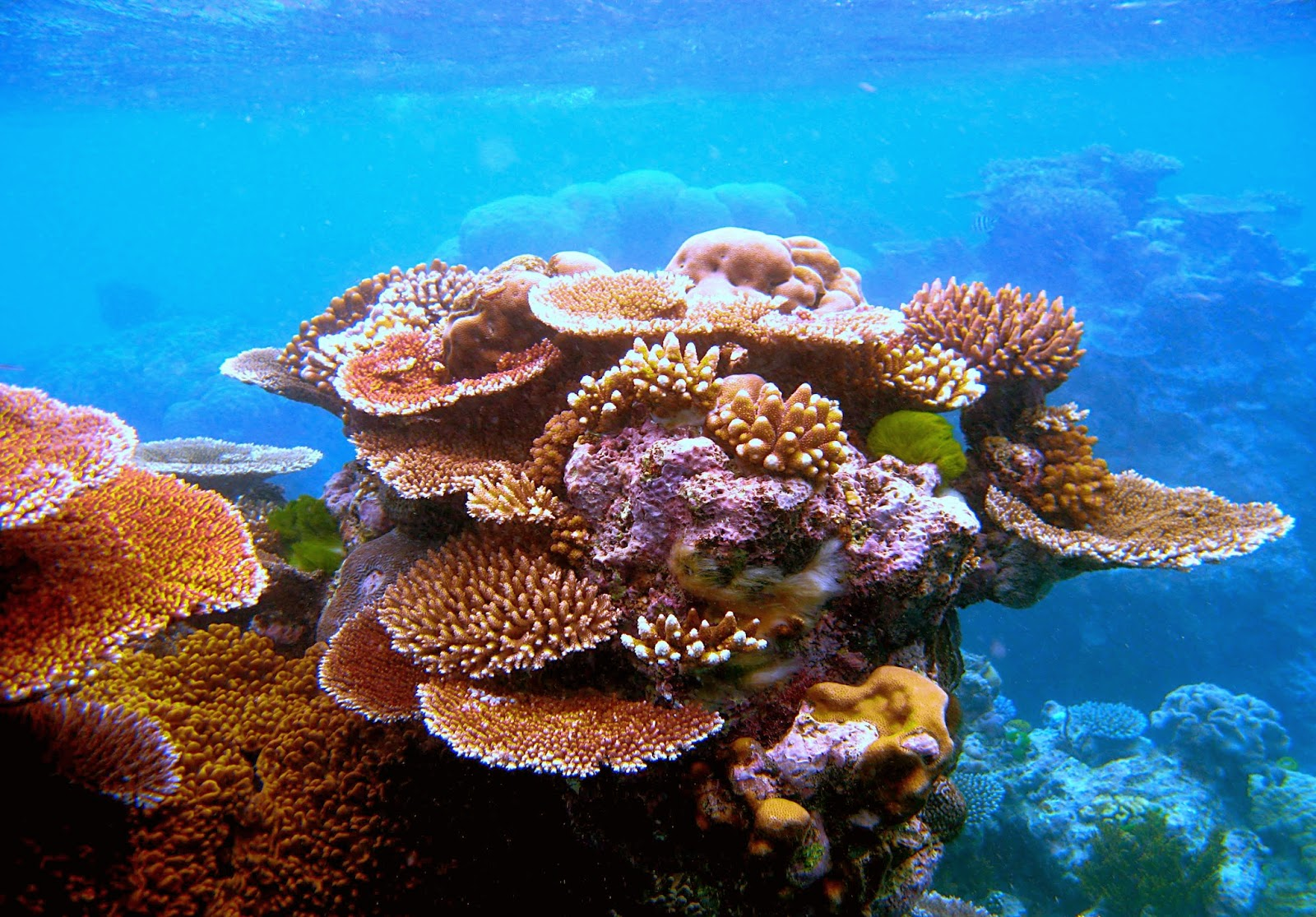 Desktop HD Wallpapers Free Downloads: Coral Reef HD Wallpapers